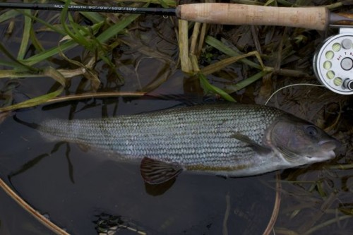 Grayling River Frome