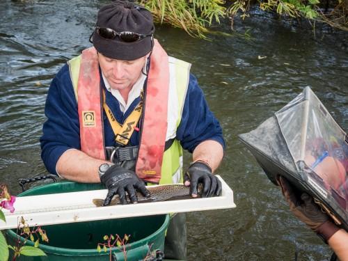 Electro Fishing Survey